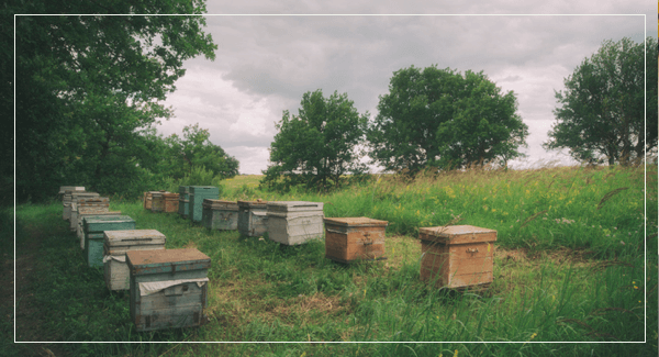 蜜蜂養殖蜂箱